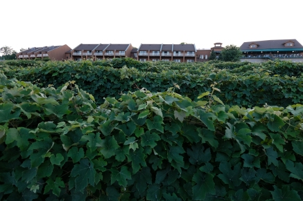 View of the Inn from the Vineyard